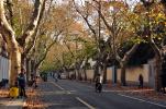 这六十多条永不拓宽的马路告诉你什么是上海气质