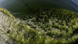 亲历莫克兰海沟的大规模藻华现象