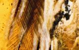 琥珀又立功:中外科学家发现一亿年前最完整古鸟