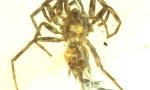 1亿年前蜘蛛长啥样