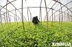 山东发布蔬菜种植时间表 黄瓜空心菜韭菜适合春播