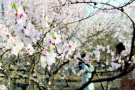 辽宁全省今起大幅度升温 周末沈阳最高温或达20℃