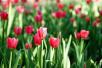 """哈尔滨植物园""""名贵花卉展""""下月等你来赏 票价20元"""