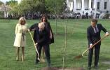 马克龙访美送给特朗普一棵树 外媒这样解读