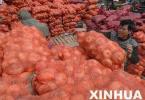 洋葱价格下跌储存商亏损 种植户应该怎么做?