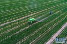 引进人才做强产业 山东加快向农业质量强省跨越