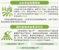 山东新旧动能转换:让传统农业变身强农富民产业