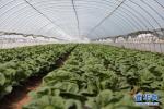 沧州:小区绿化带里种蔬菜 抽取井水浇菜园
