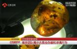 古生物学新发现 南京团队揭示古昆虫伪装和求偶行为
