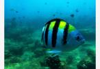 新研究发现早期鱼类生活在近岸浅水中