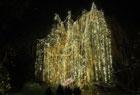 柏林圣诞花园灯光秀