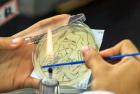 大学生脑洞大开用细菌作画
