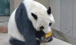 天津:动物吃饺子庆新春