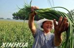 曹妃甸九农场发展休闲农业推进乡村振兴纪实