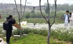 山东安丘:废弃采石坑生态修复变美景