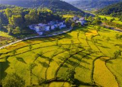 河南商城:合作經濟組織帶動産業強農民富