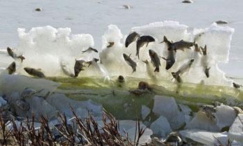 """湖鱼被冰封""""空中"""""""