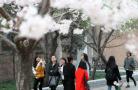 看腻十里桃花 来看看郑州的浪漫樱花吧