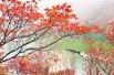 重慶巫山:小小紅葉帶動大旅游