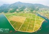 改善水质保持水土 长兴合溪水库上游千亩荒地变良田