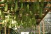 关于举办2017中国(寿光)国际蔬菜与营养高峰论坛的通知
