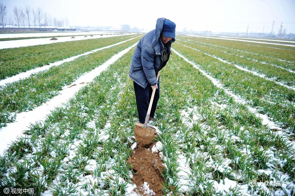 青岛:春雪润冬麦,缓解旱情