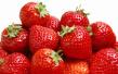 草莓控有福啦 3月份石家庄草莓采摘好去处盘点