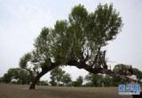 樹木真的有智慧嗎?