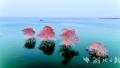 [新时代 新气象 新作为]南水北调 三年调送百个东湖水