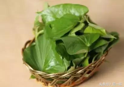 春天最值得吃的十种野菜,你认识几种?-中国搜