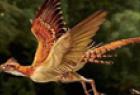 """""""世界最早的鸟"""""""