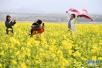 江西新余油菜花开春来早 引众多游人采撷春光