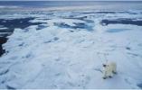 定了!中国要在北极干一件大事,被全世界疯狂围观