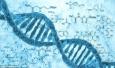 新研究称:智商至少有一半由基因决定