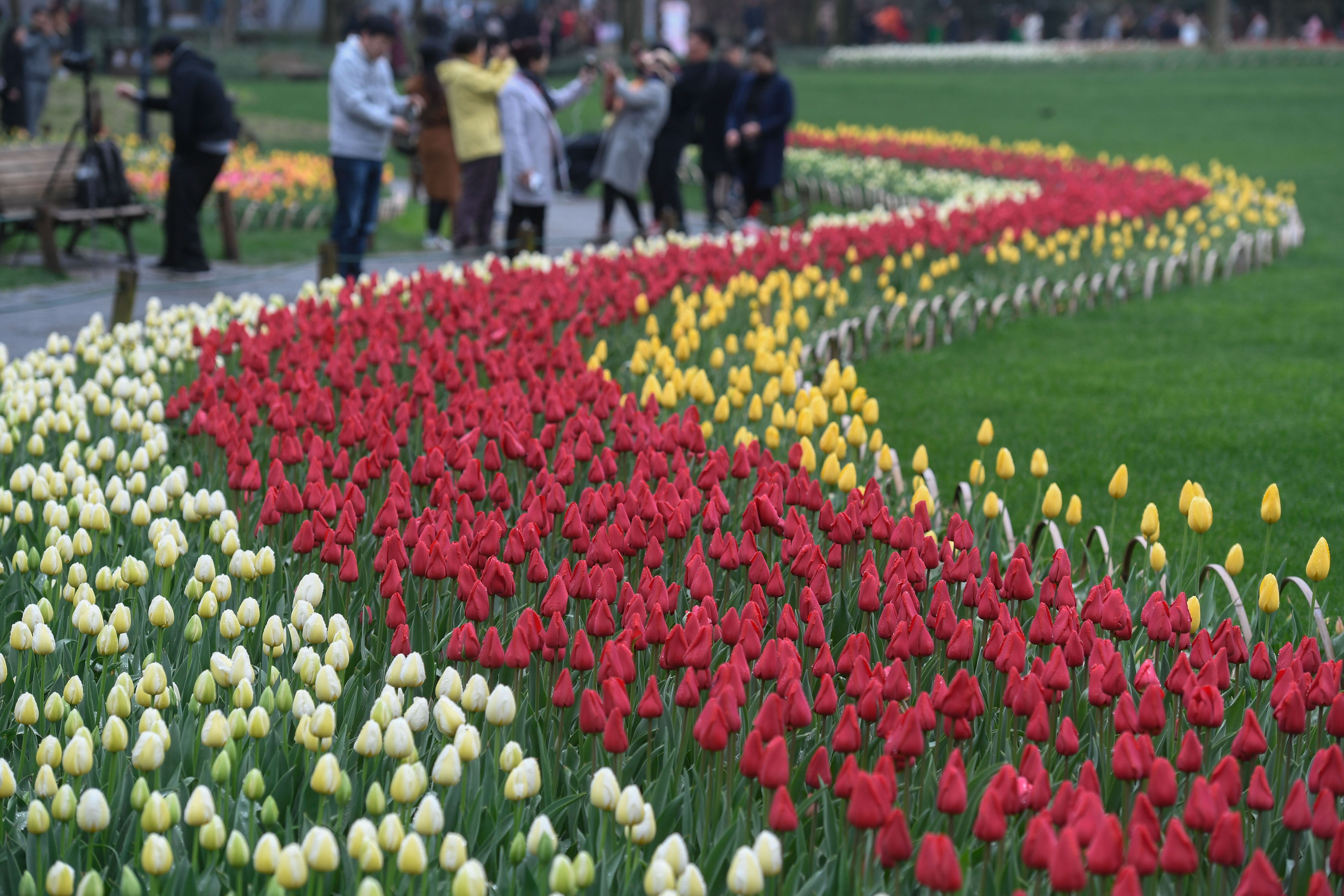 杭州:西子湖畔樱花盛开 大批游客前来观赏
