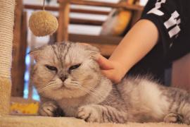 """""""撸猫族""""小心猫癣惹上身"""
