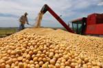 通讯:美国豆农担心成为中美贸易摩擦受害者
