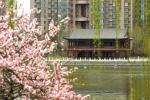 石家庄水上公园六月换新颜 一堤二桥三湖八大景