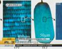 科学家发现2亿年前昆虫真实颜色 中科院南京专家这样解读……