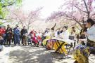 游客在公园赏樱花