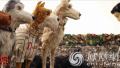 《犬之岛》北影节展映获业内外好评 被赞4月必看大片