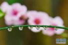 北京今夜将迎来一场春雨 明日最高气温骤跌至16℃