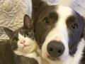 6月1日起鞍山宠物猫狗出市须检狂犬病抗体
