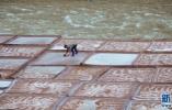 黄河三角洲废弃盐田复垦技术项目被列2018省重点研发计划