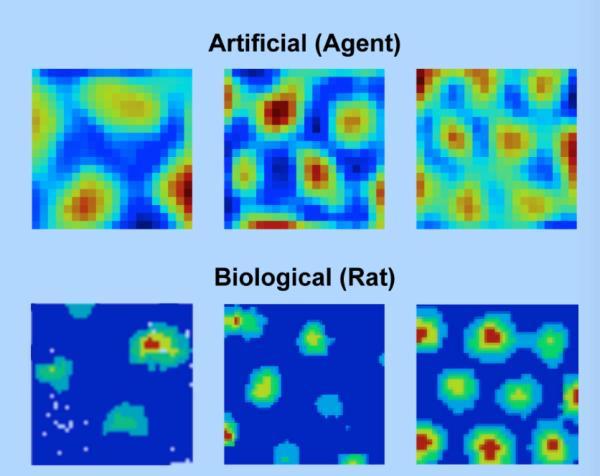 DeepMind新论文:人工智能学会像哺乳动物那样抄近路