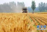 5月28日起驻马店市小麦进入集中收获期