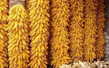 回顾2016年的七件农业大事,分析2017年农作物种植计划!