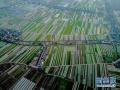 南京八卦洲未来会是什么样?或变身华东最具特色休闲旅游岛