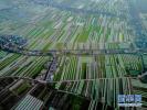 南京八卦洲未來會是什麼樣?或變身華東最具特色休閒旅遊島