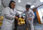 弘扬传统医学文化 山东牵头制定拔罐诊疗国际标准